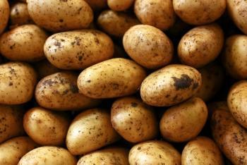 Принимаем заявки на будующий урожай картофеля