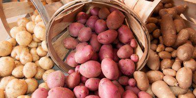 ТВОЙПРОДУКТ: Картофель – повод для выставки