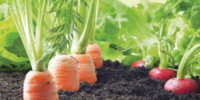 ТВОЙПРОДУКТ: К био-продуктам доступным и разным