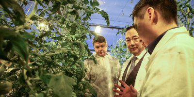 ТВОЙПРОДУКТ: В Якутии открылся тепличный комплекс всесезонной работы