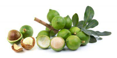 ТВОЙПРОДУКТ: Макадамия - орех для знатока