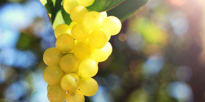 ТВОЙПРОДУКТ: Виноград с кофейных плантаций