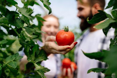 Новости ТВОЙПРОДУКТ: Липецкая область продолжает наращивать объем производства овощей закрытого грунта