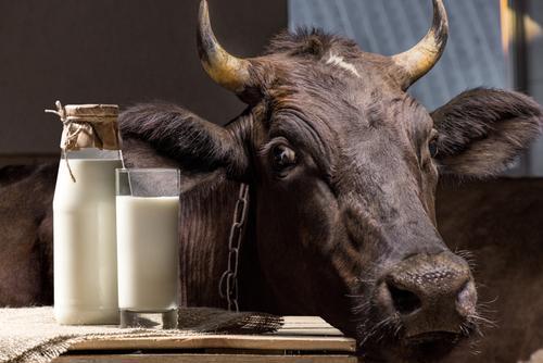 Новости ТВОЙПРОДУКТ: Молочное животноводство Татарстана переживает масштабную модернизацию