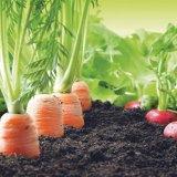 К био-продуктам доступным и разным