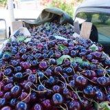 Овощи и фрукты приедут в Россию из Сирии