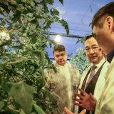 В Якутии открылся тепличный комплекс всесезонной работы