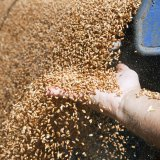 От активного развития – к новым вопросам. Совещание по сельскому хозяйству прошло в Воронеже