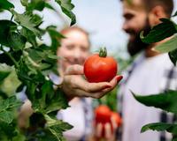Липецкая область продолжает наращивать объем производства овощей закрытого грунта