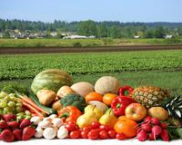 Минсельхоз прогнозирует удвоение производства тепличных овощей к 2024 году