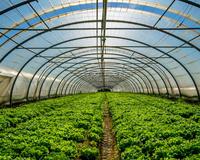 Сбор тепличных овощей вырос на 28,3%