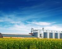 Тамбовская область направит на поддержку сельского хозяйства более 3 миллиардов рублей