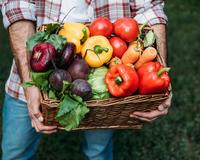 В 2019 году урожай тепличных овощей прогнозируется на уровне 1,3 млн тонн