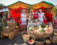 Волгоградские овощеводы обменялись опытом в рамках Дня поля